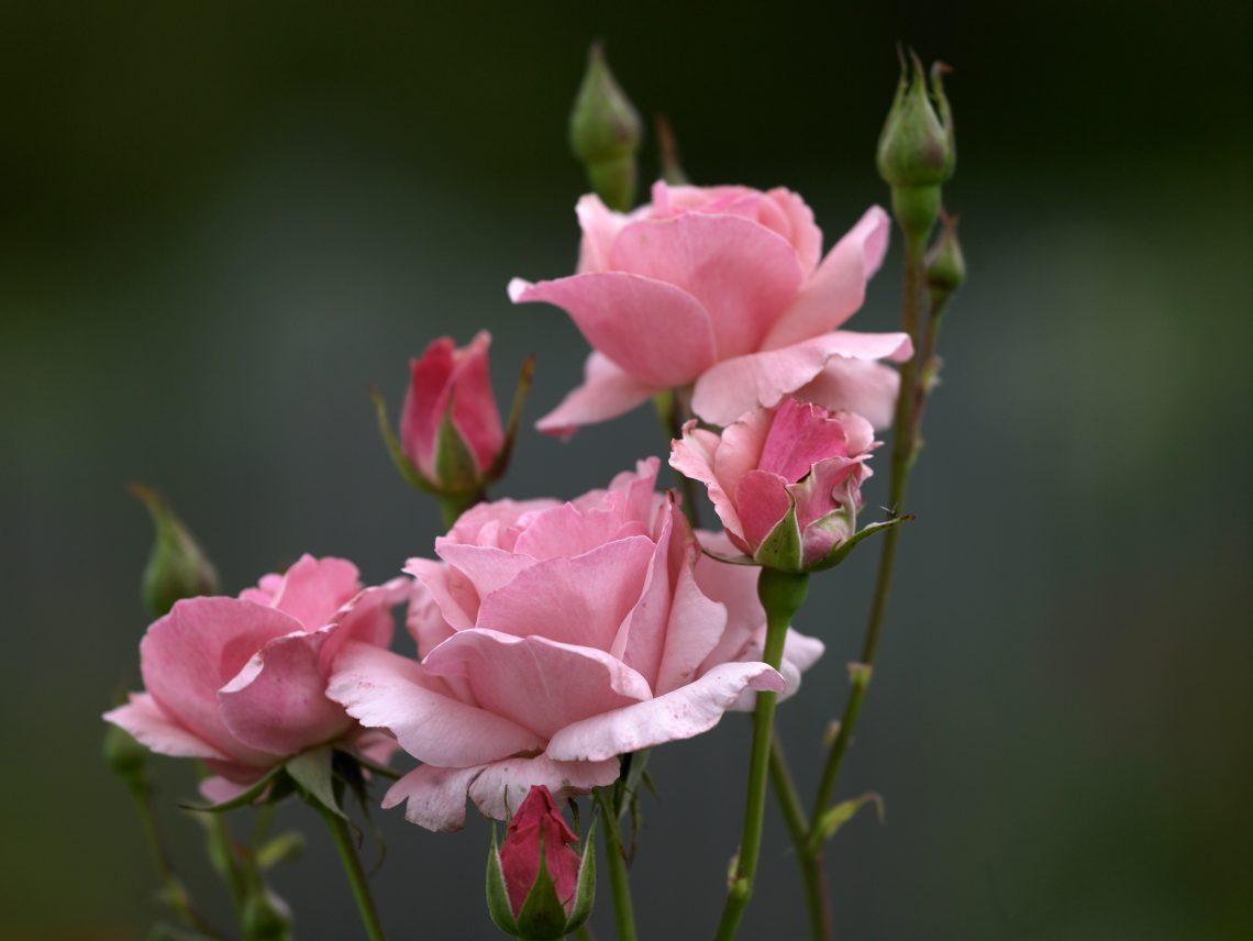 © Natur im Garten